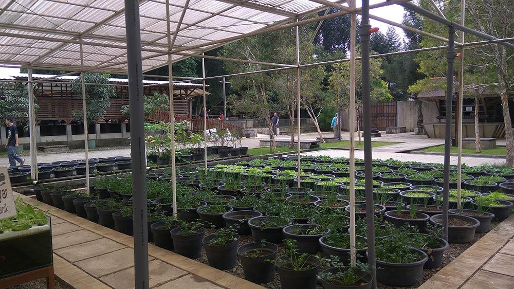 hidroponik kuntum nursery bogor