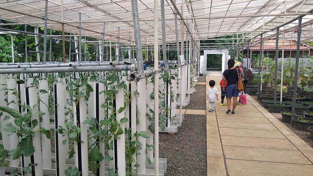 kebun hidroponik kuntum nursery bogor