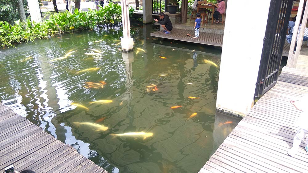 kolam ikan kuntum bogor